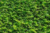 Grüne blätter hintergrund. — Stockfoto