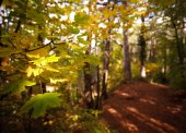 Yellow leaves on a background of autumn forest — Stockfoto