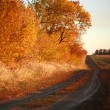 Autumn country road, along the yellow forest — Stock Photo #55519223