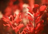 Beautiful autumn landscape in forest, red leaves in sunlight — Stock Photo