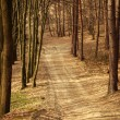 Path in old forest, road between trees, nature background — Stock Photo #69389409