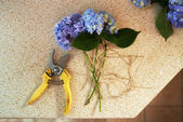 Cut flowers and secateurs are on  table — Stock Photo