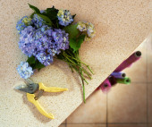 Clipped with shears bouquet on  table — Stock Photo