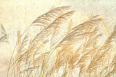 Reed and purple eulalia — Stock Photo