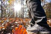 Man walk in Autumn fores — Stock Photo