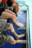 Balık spa cilt tedavisi — Stok fotoğraf