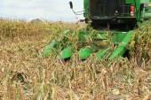 Farmer combines a field of corn — Zdjęcie stockowe