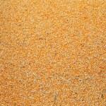 Raw kernel corn beans — Stock Photo #56716507