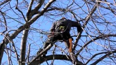 Tree Climber Among Branches — 图库视频影像