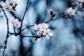 Fruits blossom — Stock Photo