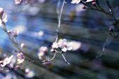 Fruits blossom 2 — Stock Photo