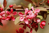 Flowers in spring — Stock Photo
