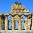 Greek temple of Cecere- Paestum Italy — Stock Photo #58644799