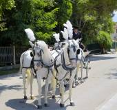 Paestum, Italy - 08.15.2014: coachman and carriage drawn — Stock Photo