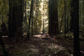 Lumière dans une forêt — Photo