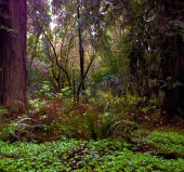 Muir Woods — Stock Photo