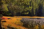 Tioga Pass Pond — Stock Photo