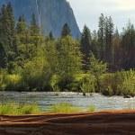 River Log — Stock Photo #75351653