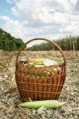 Freshly corn in the basket. harvesting — Stock Photo