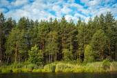 View of the coniferous and deciduous trees — Foto Stock