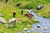 Horse herd on the pasture in the mountains — Foto de Stock