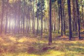 Vintage forest background — Stock Photo