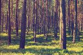Ročník lesní pozadí — Stock fotografie