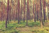 Sfondo foresta d'epoca — Foto Stock