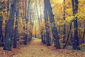 Colorful autumn trees in forest, vintage look — Stock Photo