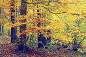 Colorful autumn trees in forest, vintage look — Foto de Stock