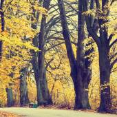Autumn landscape with road and beautiful colored trees, vintage look — Foto Stock