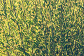 Clump of high grass, natural background — Stock Photo