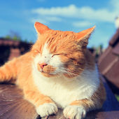 Ginger cat lying on a bench — Stock Photo