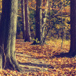 Colorful autumn trees in forest, vintage look — Stock Photo #61297187