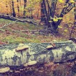 Colorful autumn trees in forest, vintage look — Stock Photo #61297213