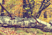 Colorful autumn trees in forest, vintage look  — ストック写真