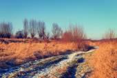 Dry grass field, vintage color tone — Zdjęcie stockowe