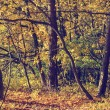 Colorful autumn trees in forest, vintage look — Stock Photo #68107803