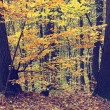 Colorful autumn trees in forest, vintage look — Stock Photo #68107845