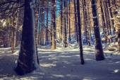 Winter forest background, vintage look — Stock Photo