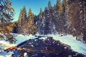 River in the winter mountain forest. — ストック写真