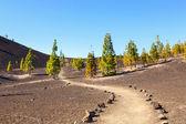 El teide national park, tenerife, Islas Canarias, España — Foto de Stock
