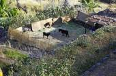 La Gomera island. The small farm with the sheep in Valle Gran Rey, Canary, Spain — Stockfoto