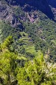 """Riserva naturale """"Majona"""", isola di La Gomera, Canarie, Spagna — Foto Stock"""