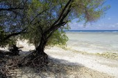 The sunny tropical lagoon on Maldives island — Stock Photo