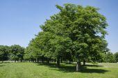 Parku, w pobliżu zamku Cerveny Kamen — Zdjęcie stockowe