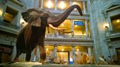 Smithsonian Museum of Natural History — Stock Photo