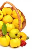 Ripe quince in the basket  — Stock Photo