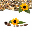 Many-colored little pebbles and beautiful flower — Stock Photo #55412857