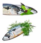 Fresh mackerel fish with dill — Stock Photo